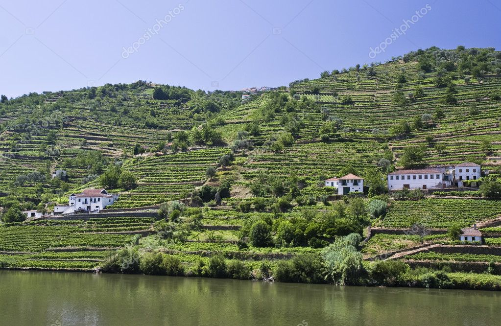 Landscape in Douro Valley showing the vineyards of the Port Wine — Stock Photo #3791593