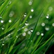 Stock Photo: Morning dew on a grass