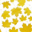 Stock Photo: Autumn maple leaves isolated on white