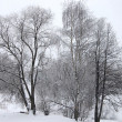 Snow winter forest in Russia — Foto de Stock