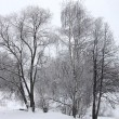 Snow winter forest in Russia — Stockfoto