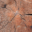 Cut of an old tree. Close up — Stock Photo #2892990