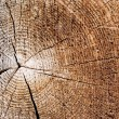 Cut of an old tree. Close up — Stock Photo #2954803
