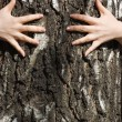 Hands clasp a tree trunk - Stock Photo