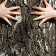 Hands clasp tree trunk — Stock Photo #2955157
