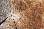 Cut of an old tree. Close up — Foto de Stock