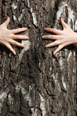 Hands clasp a tree trunk — Stock Photo