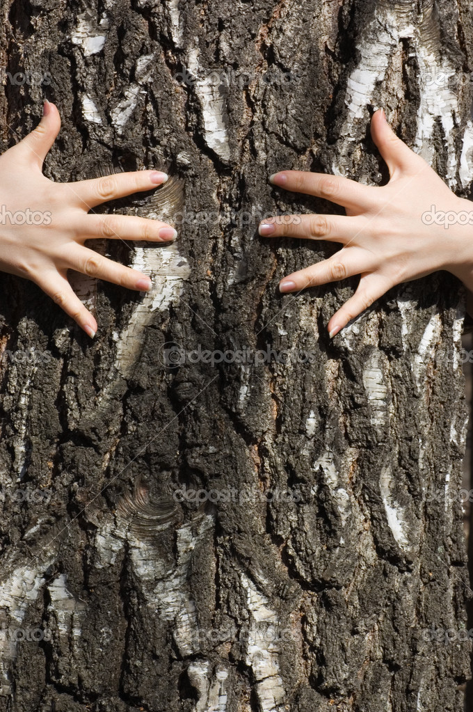 Hands clasp a tree trunk  Stock Photo #2955157