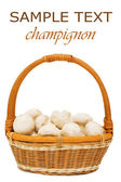 Wattled basket with field mushrooms — Stock Photo