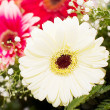 Stock Photo: Beautiful fresh flowers in a bouquet