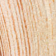 Cut of an old tree. Close up — Stock Photo #3166594