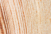 Cut of an old tree. Close up — Stock Photo