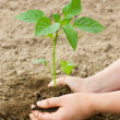 Woman puts a plant in the earth - Stockfoto