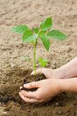 Mujer pone una planta en la tierra — Foto de Stock
