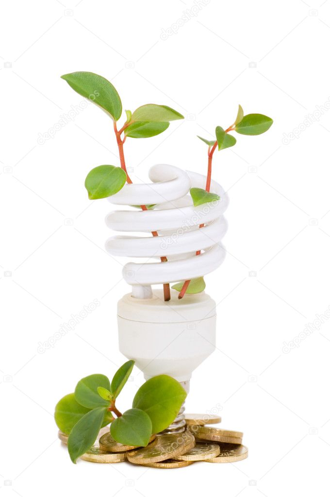Energy saving lamp with green seedling  Stock Photo #3291371