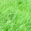 Abstract close-up green grass — Stock Photo