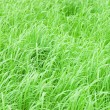 Stock Photo: Abstract close-up green grass
