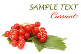 Red currant isolated on white background — Foto Stock
