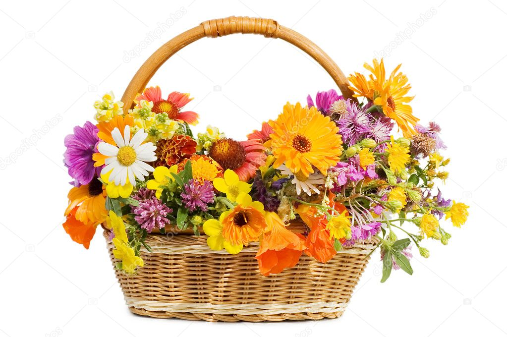Beautiful flowers in a basket  isolated on white  — Stock Photo #3495830