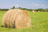 Haystacks harvest against the skies — Stock Photo