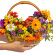 Stock Photo: Beautiful flowers in a basket isolated on white