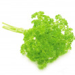 Bouquet of parsley isolated on white background - Stock Photo