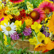 Beautiful flowers in a basket — Stock fotografie