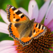 Colored butterfly on flower - Photo