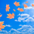 Flying autumn leaves against the blue sky — Stock Photo