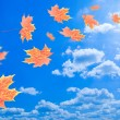 Flying autumn leaves against the blue sky — Stock Photo #3913607