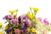 Bouquet of wild flowers isolated on white background — Stock Photo