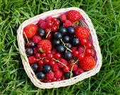 Ripe berries in a basket — Stock fotografie