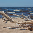 Beach of the Baltic sea — Stock Photo
