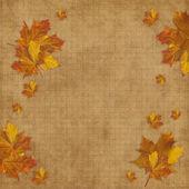 Cartão de outono para o feriado com licença — Foto Stock