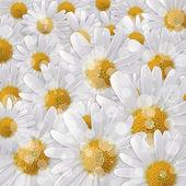 Carte pour la fête sur le fond de fleurs — Photo