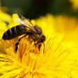 Honey bee - Foto Stock