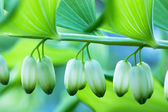 Closed buds — Stock Photo