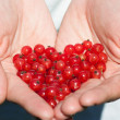 Stock Photo: Currants in hands
