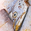 Fresh Conger fish - Stock Photo