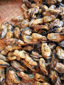 Sun dried oysters — Stock Photo