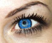 Blue woman eye — Stock Photo