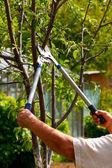 Gardening — ストック写真