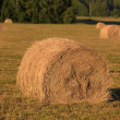Haycocks on the field — Stock Photo