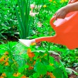 Watering flowers in sunny summer day — Stock Photo