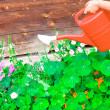 Watering flowers in sunny summer day - Stock Photo