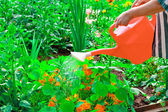 Vattna blommor i solig sommardag — Stockfoto