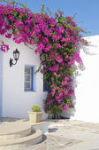 Blooming bougainvillea in the window — Stock Photo