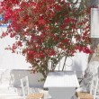 Bush flowers around the restaurant table - Stock Photo