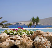 Stone flower beds around the pool — Stok fotoğraf