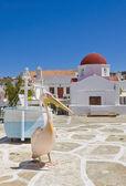 Pelican in Mykonos town near the church — Stock Photo